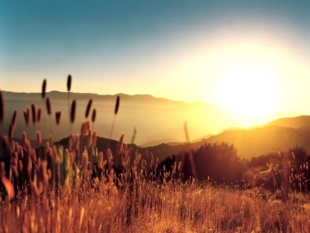 أستطيع التحدث فتلك المناظر تجبرني hay-in-summer-light-