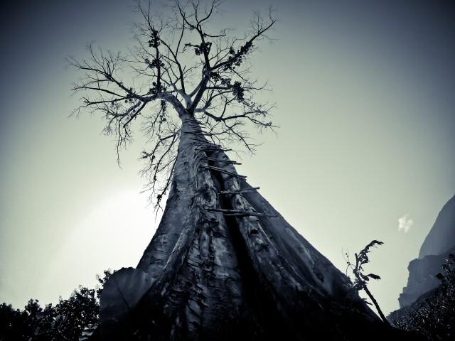 Поблизу дерева, розміри здаються ще більшими, а вершина – більш недосяжною