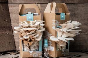 Сам собі господар: як вирощують гриби в домашніх умовах?