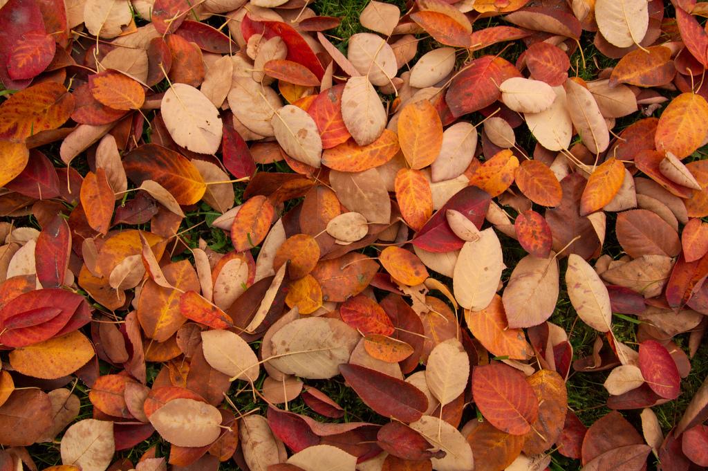 Осінні шпалери