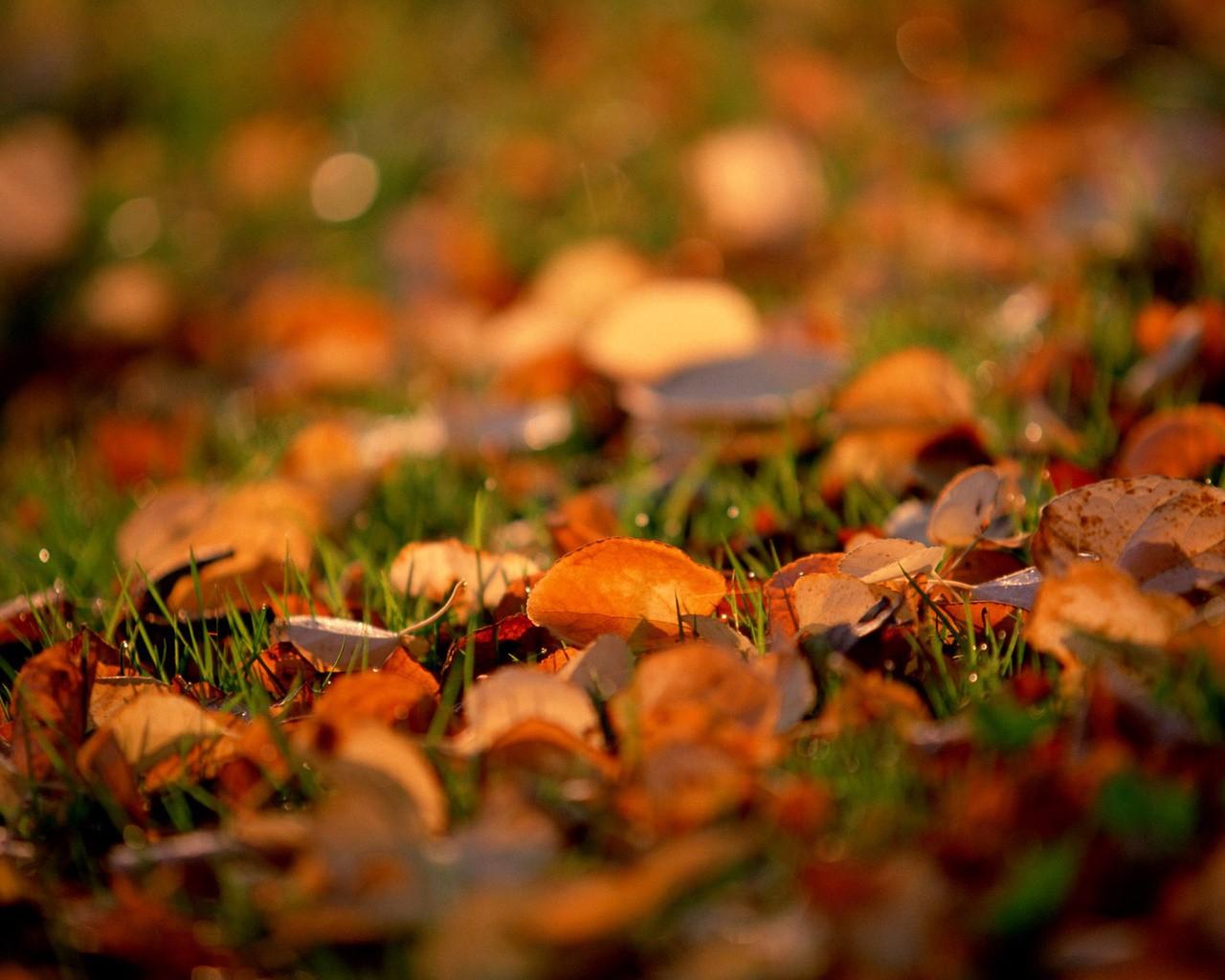 осінь фото на робочий стіл