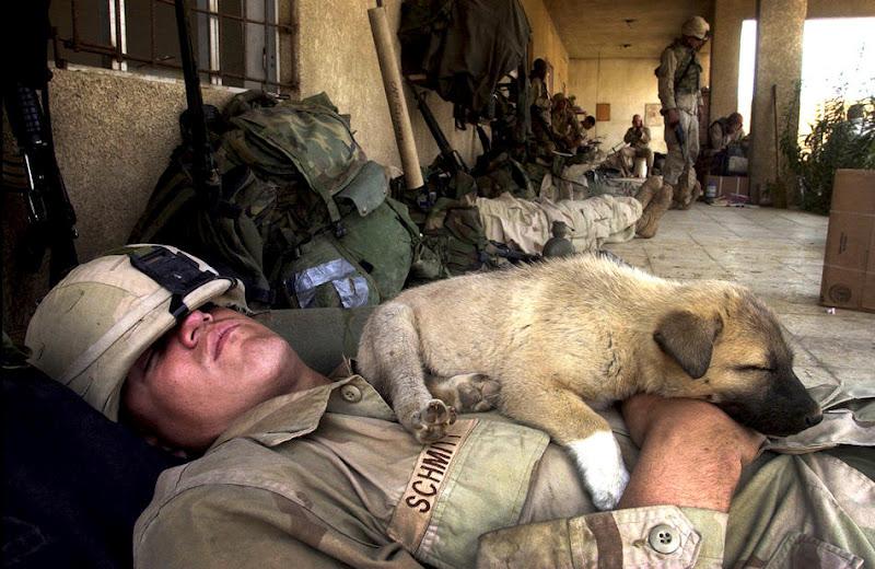 Мирні фото посеред війни