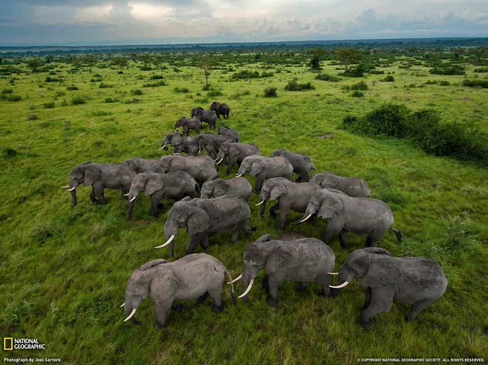 Парк Королеви Єлизавети, Уганда (Joel Sartore, National Geographic)