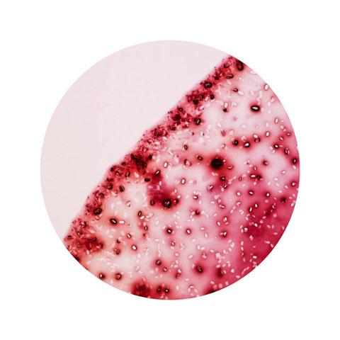 Вино під мікроскопом