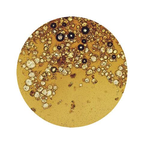 Кава під мікроскопом