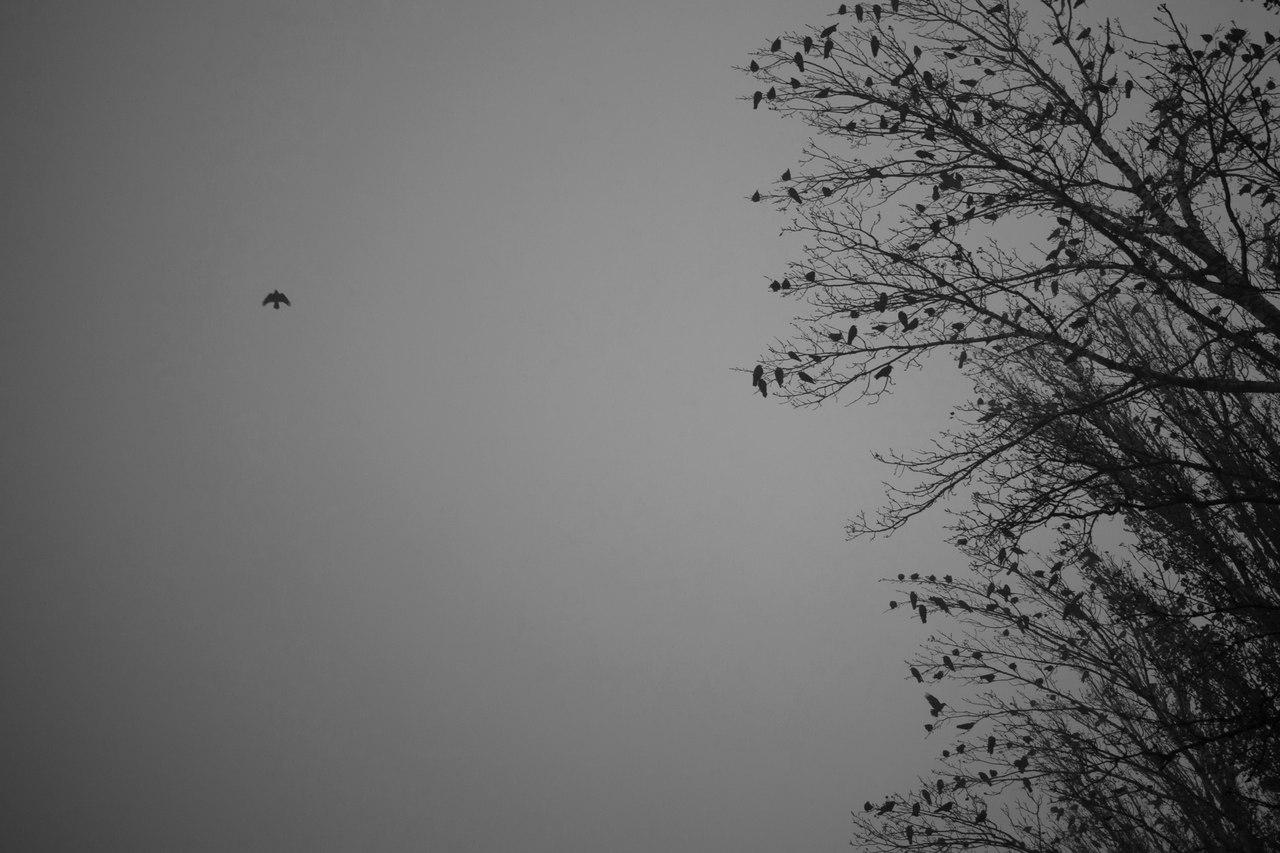 Фотопрофіль: Віктор Дьомін