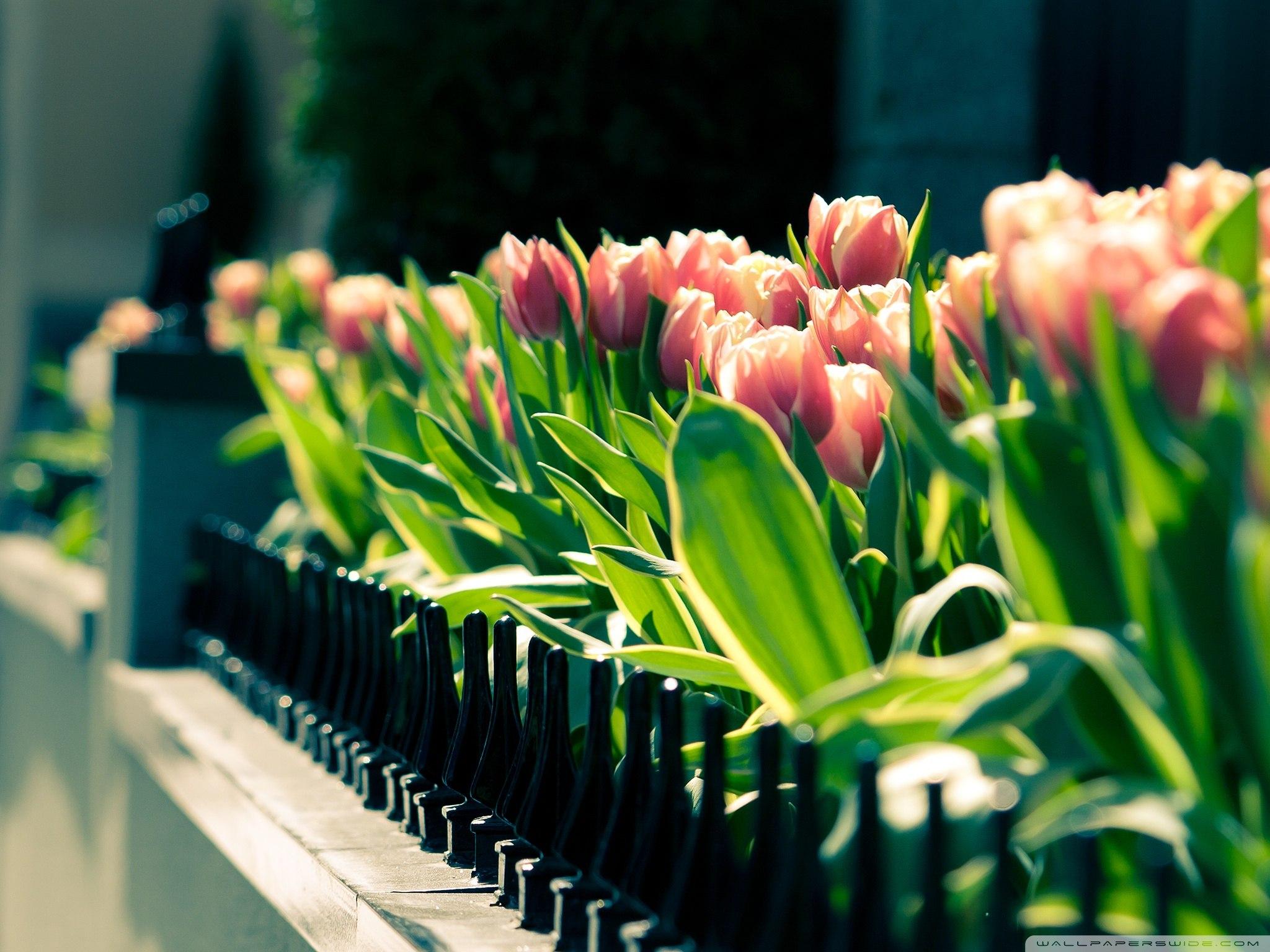 Весняні шпалери для робочого столу