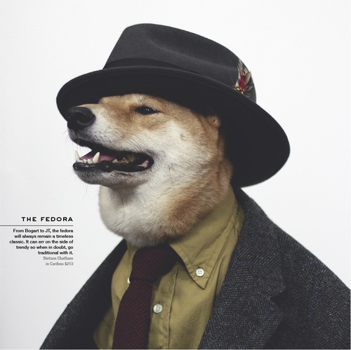 Menswear Dog_08