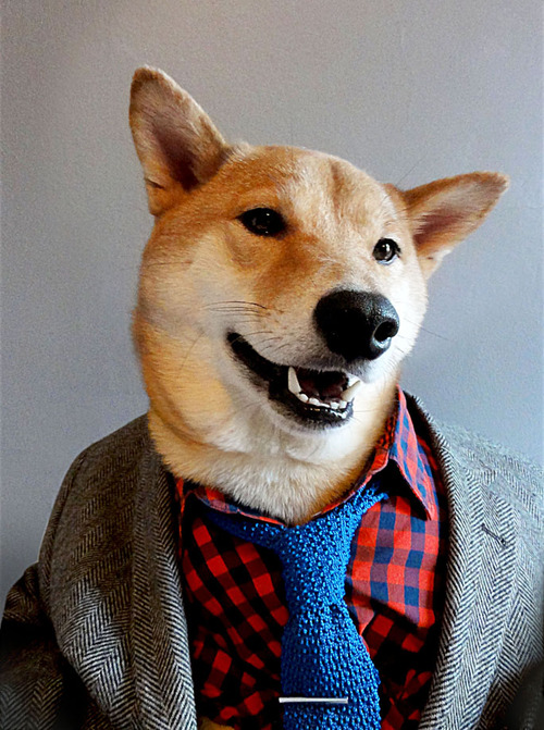 Menswear Dog_14