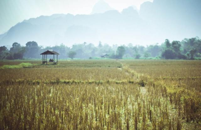 Ванг Вьенг. Сухі рисові поля маленького селища