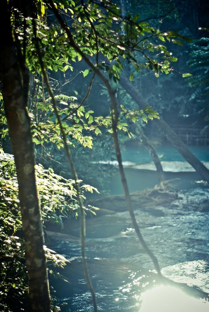 Крізь ліани і старі дерева, відчуваєш себе справжнім Мауглі
