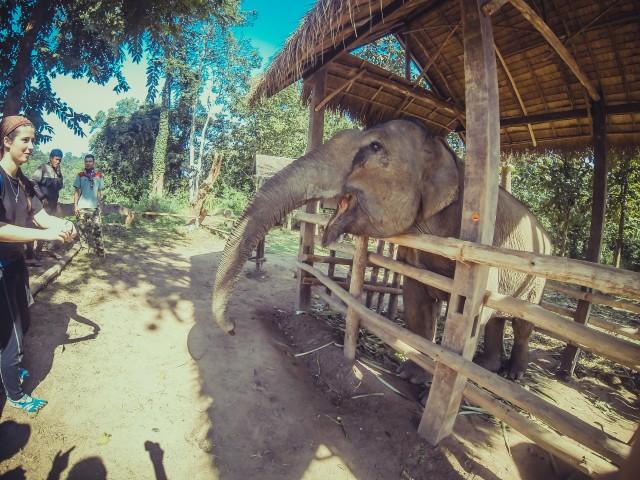 Слониха завжди за екстра їжі