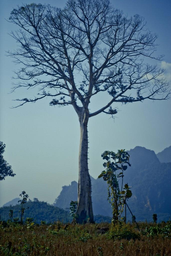 Дерево над прірвою