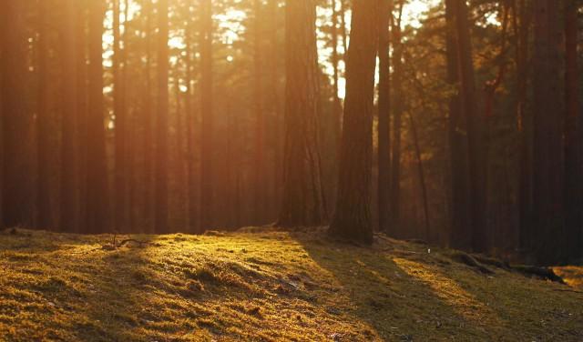 latvia-forest