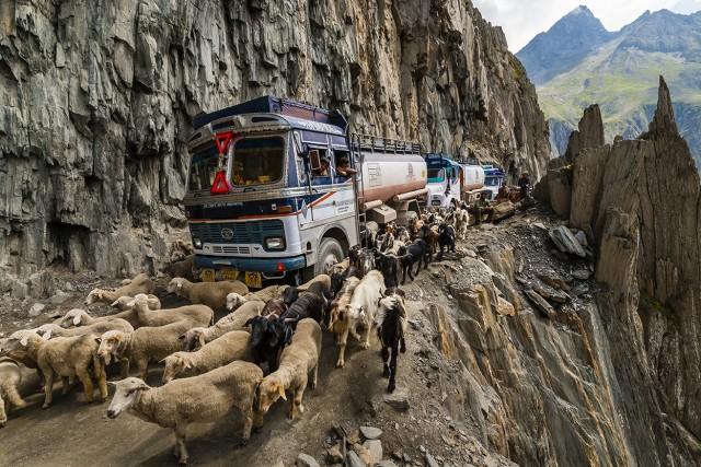 Sheep and goats being herded over the Zojila Pass as a traffic jam idles trucks because of a landslide